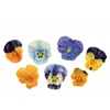 Sugared Edible Violas, Set of 10