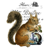 Woodland Squirrel Flour Sack Dish Towel