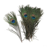 SALE!  Natural Peacock Feathers, Package of 24