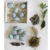 Ceramic Robin Eggs, Set of 12