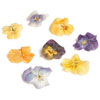 Sweet Crystal Sugared Edible Violas, Set of 9