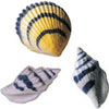 Sugar Colored Sea Shell  Assortment, Set of 8