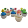 Fondant Gerbera Daisy Assortment Set of 30