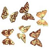Dark Chocolate Butterflies, Set of 6 Butterflies