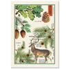 Michel Designs Balsam Fir Kitchen Towel